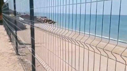Отец российской певицы Алсу захватил себе часть пляжа под Севастополем: люди возмущены (видео)