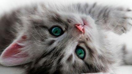 Аллергия на домашних животных