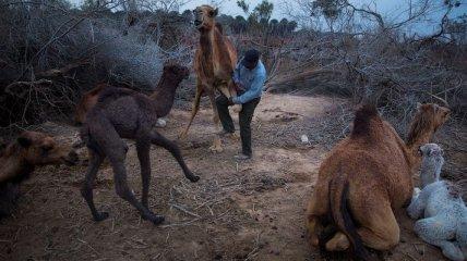 Жители арабского мира, которые ведут кочевой образ жизни (Фото)