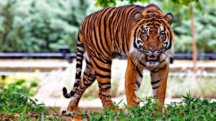 ТОП 10 видов животных, находящихся под максимальной угрозой исчезновения