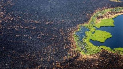 Горит по всей планете - NASA опубликовала карту пожаров мира (фото, видео)