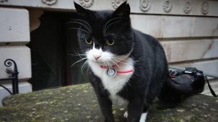 Не справляется с обязанностями: служебного кота МИД Британии посадили на диету