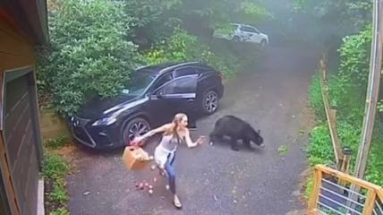 Дикое животное залезло в машину.