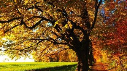 Сухо и солнечно: прогноз погоды на 17-18 октября