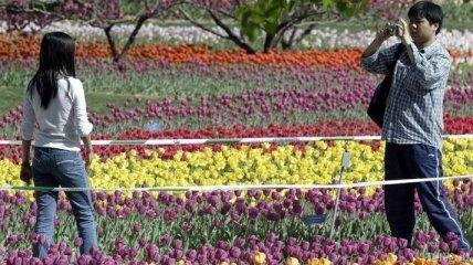 Пекинский Ботанический сад - самый крупный сад в Северном Китае