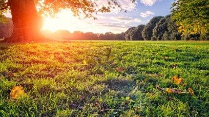 Прогноз погоды в Украине на 19 июня: будет солнечно