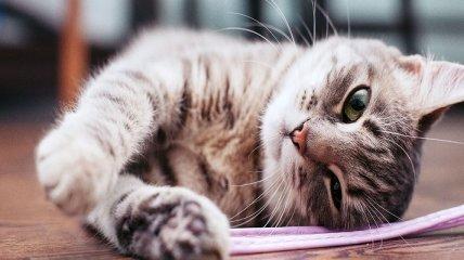 В Житомире полиция расследует гибель кошки после падения с 5 этажа: женщину подозревают в живодерстве