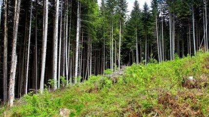В Гослесагентстве планируют реализовать новый эко-проект