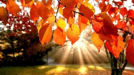 Неожиданный прогноз: синоптики рассказали, каким будет сентябрь