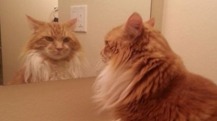 """""""Кто я и что я?"""": подумал Мурчик, глядя в зеркало"""