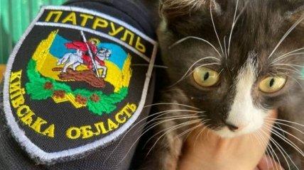 У поліції розповіли, як боротися проти жорстокого поводження з тваринами