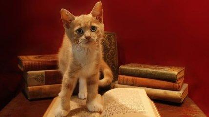 О кошках, о котах, о котятах: 12 лучших книг для детей