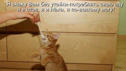 Свежая порция смешных котов