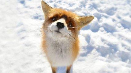 До невозможности милые лисички, которые поднимут вам настроение