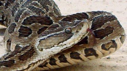 """Затягивает раны за 45 секунд: ученые создали медицинский """"суперклей"""" из змеиного яда"""