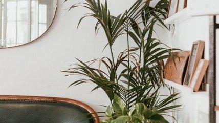 Як використовувати стиль Urban Jungle для вашої оселі