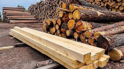 В Украине новые правила продажи древесины