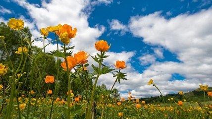 Грозы, град и жара: синоптики дали прогноз на последний день весны