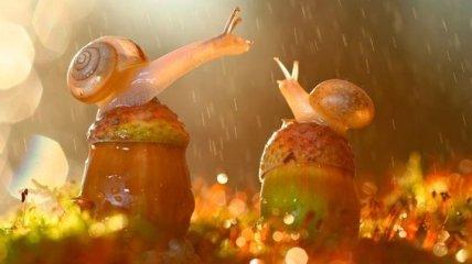 Чудеса макросъемки: неимоверная красота крошечных существ (Фото)