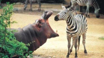 Стамбульский зоопарк - Турция (Фото)