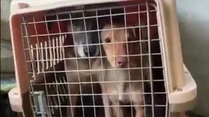Собаки были заперты в клетках