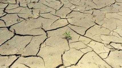 Эксперт: Украина может потерять половину пахотных земель
