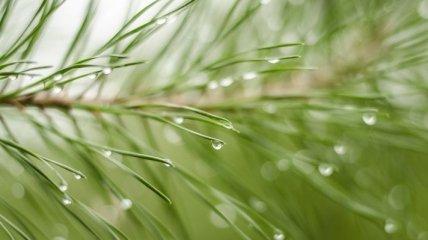 Дожди из Украины выметает антициклон Xandra: прогноз погоды на 17-18 июля
