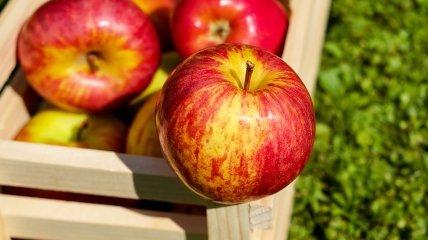 Фермеры сетуют на низкий спрос насчет яблок среди потребителей