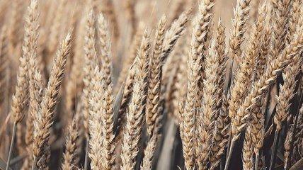 Украинские аграрии нарастили объемы экспорта зерновых