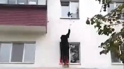 Кот застрял в окне и едва не погиб