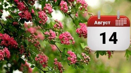 Медовый Спас и Успенский пост: народные приметы, запреты и поздравления на 14 августа