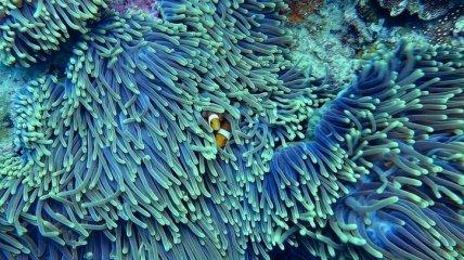 Кораллы способны регенерироваться: доказано исследованием