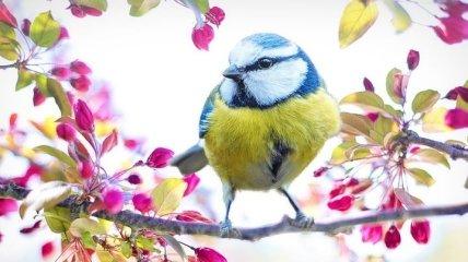 Первый день весны: красивые поздравления в прозе и открытки