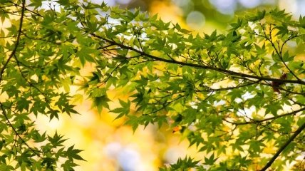 Киев через тендер закупит деревья на 4,3 млн