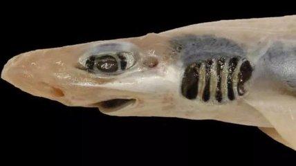 Без зубов и кожи: в Италии поймали акулу, пострадавшую от загрязнения и окисления воды (Фото)