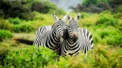 К концу века с планеты исчезнут 550 видов животных: но еще не все потеряно