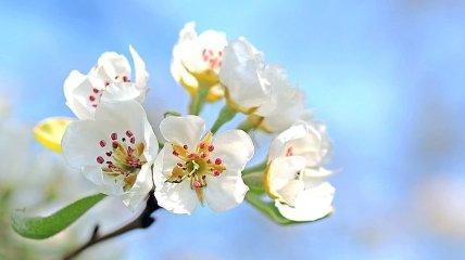 Снег идет, а яблони цветут: видео природной аномалии на Николаевщине