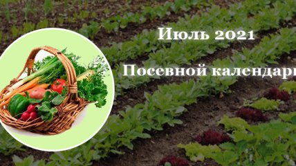 Благоприятные дни для огородных и садовых работ: что и когда можно садить в июле 2021