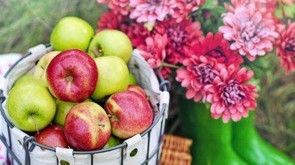 """Далеко не """"супер-фуд"""": диетолог рассказал, почему пользу яблок переоценивают"""
