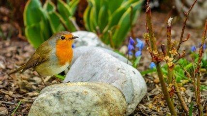 Ефимов день: приметы и обряды 24 марта