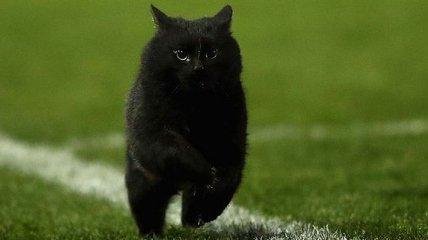 Забег черного кота поразил зрителей на стадионе и пользователей сети (Видео)