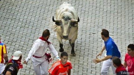 На фестивале в Памплоне все еще убивают быков