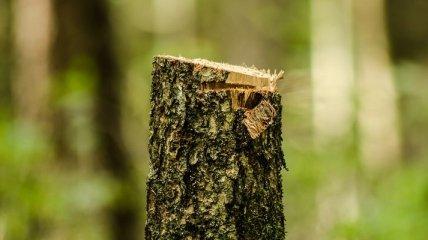 Ученые: Нескончаемая вырубка лесов может привести к гибели человечества