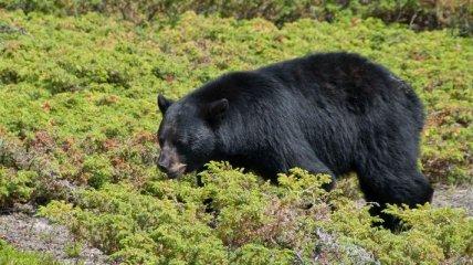 Челябинские мужчины избили медведя в Польше