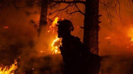 Под Тернополем мужчина жег мусор в лесу и получил штраф в размере 175 тысяч гривен