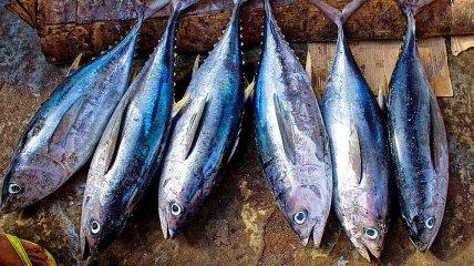 И похудеть можно, и оздоровиться: почему тунец является Вашим другом