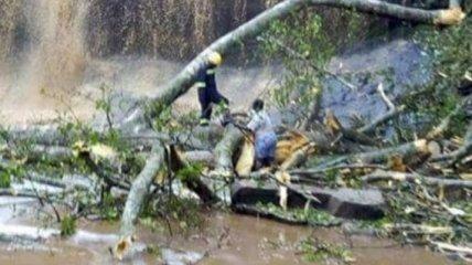 В Гане из-за падения дерева погибли около 20 человек