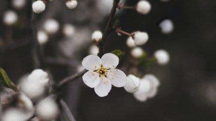 Какой праздник 12 марта: народные приметы и запреты