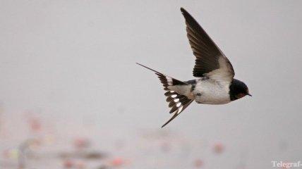 В Беларуси знатоки птиц открыли чемпионат спортивной орнитологии