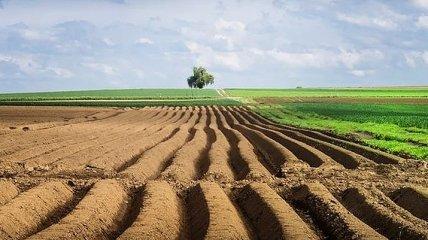 Опрос: Как украинцы относятся к продаже земли